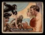 1950 Topps Bring Em Back Alive #77   Monkeys On The Loose Front Thumbnail