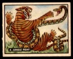 1950 Topps Bring Em Back Alive #64   Jungle Fight Front Thumbnail